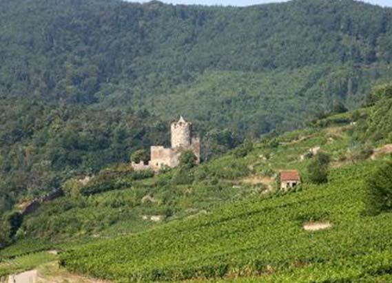 Notre gamme de vins d'Alsace